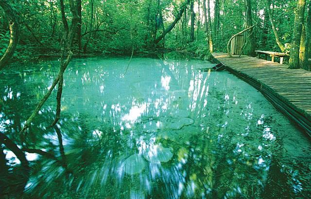 Removiendo impresiones, dejando la mente como el agua cristalina