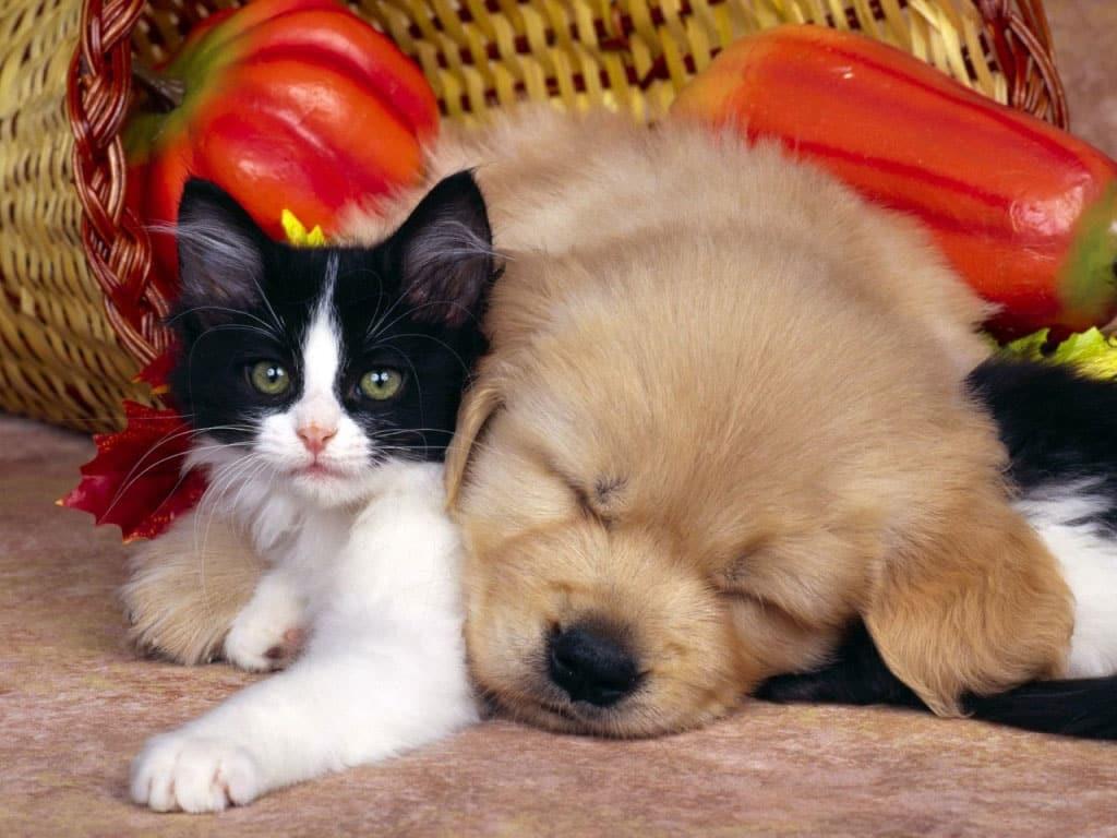Perro y gato como amigos