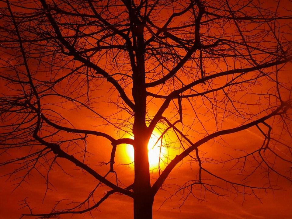 Por encima del bien y del mal. Puesta de sol sobre árbol del conocimiento