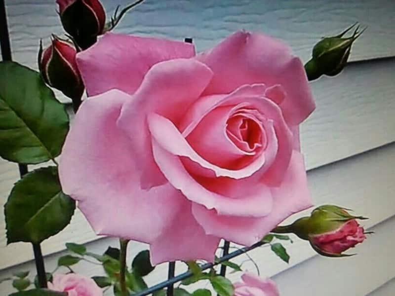 14 de Marzo – Estallar como una flor – Respuestas al corazón