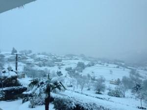 Nieve en la peral - paradoja de la vida