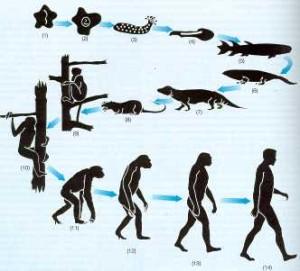 Esquema de la evolución