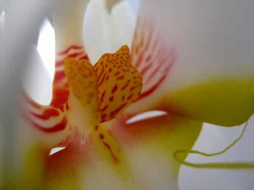 Como amor florece el mundo