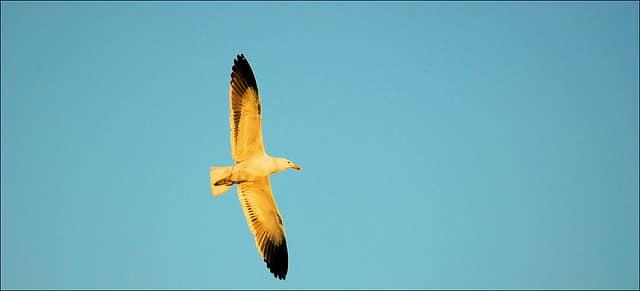 9 de Marzo – Pájaros alados vuelan alto – Respuestas al corazón