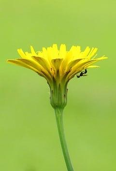 Flor de vida