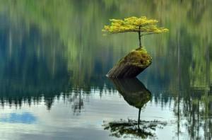 Curso Meditación y Mindfulness