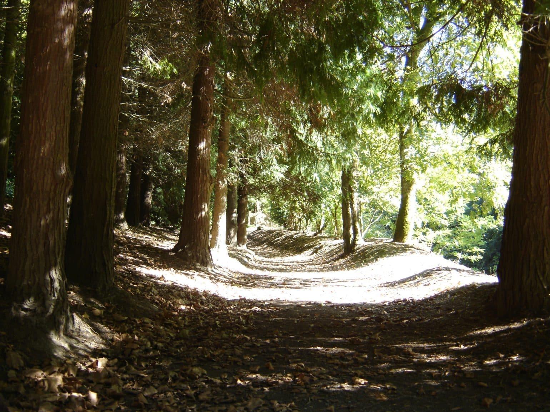 Paseando por sus caminos entre bosques