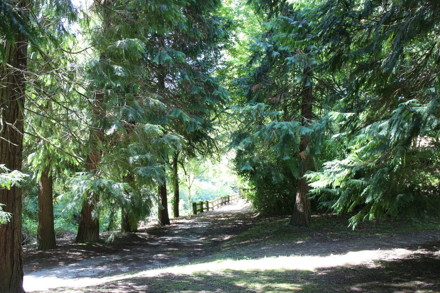 42º Retiro Anual de Meditación y Mindfulness Paseos contemplativos